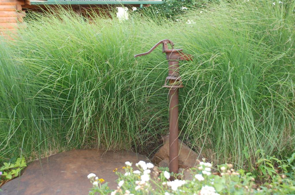 Maiden Grass Becky S Flower Farm Nw Arkansas